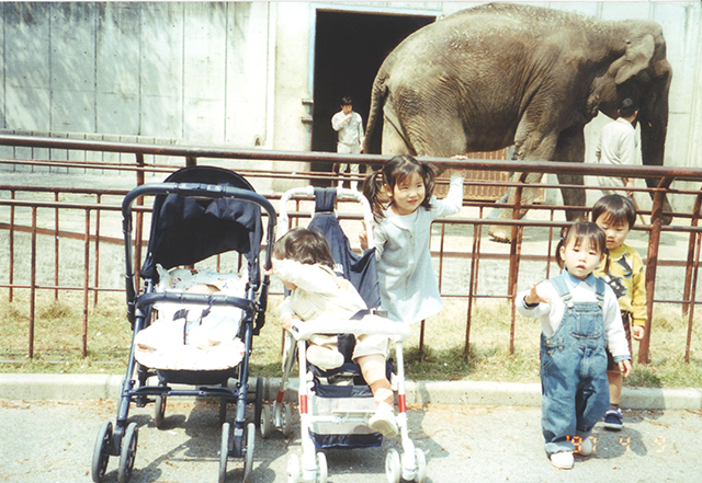 ゾウ(1997年)
