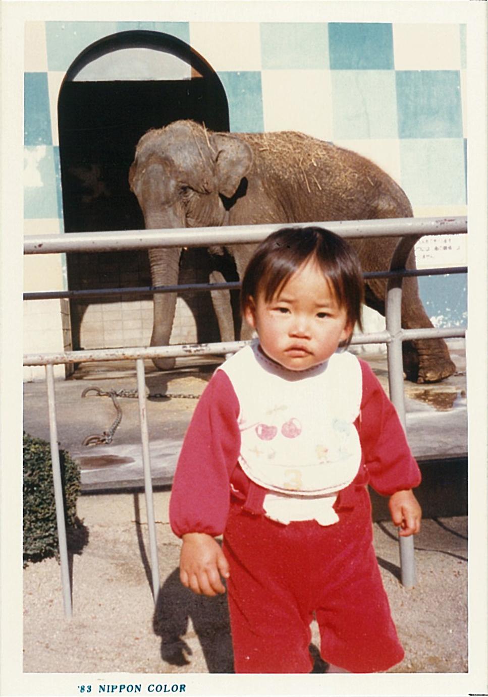 ゾウ(1983年)