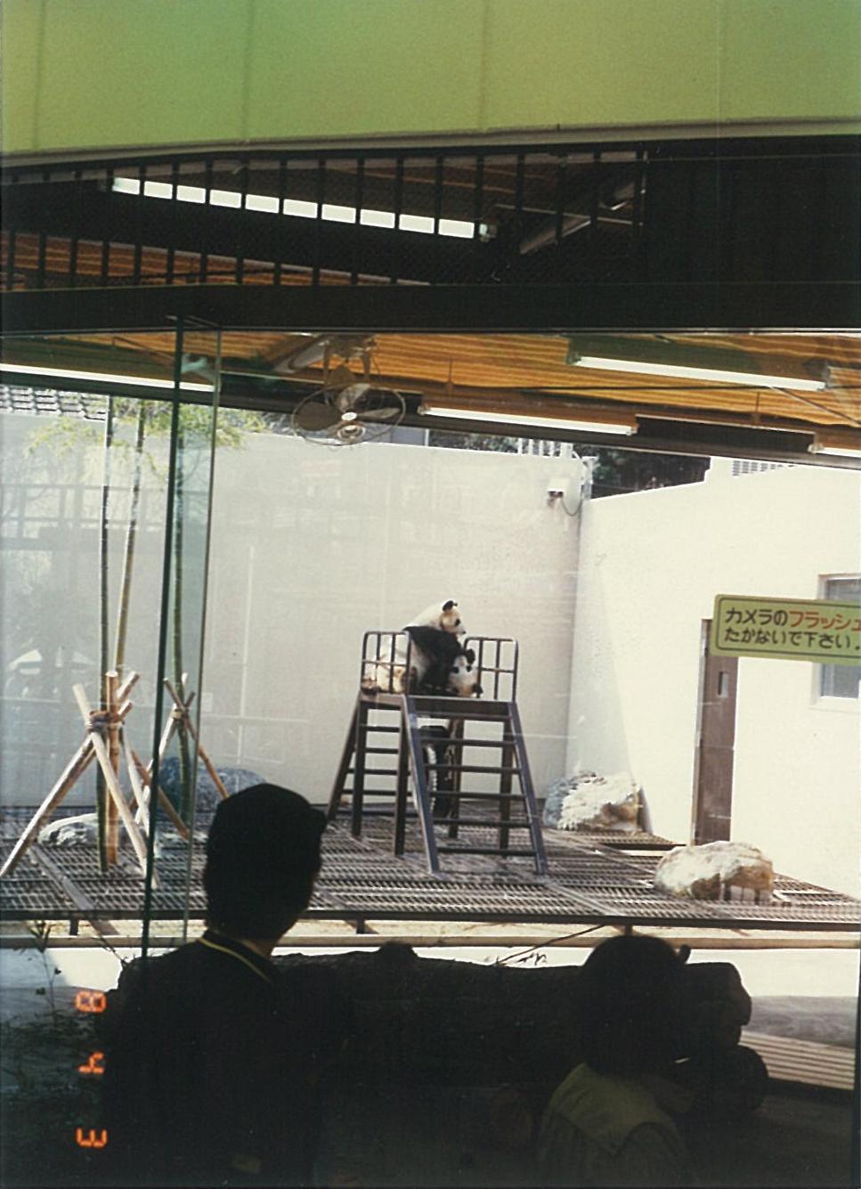 パンダ(中国三大珍獣展/1988年)