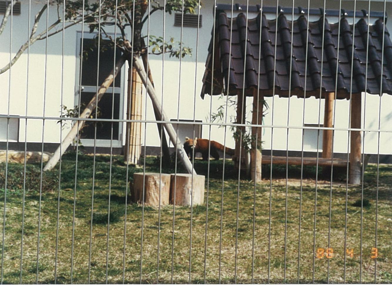 レッサーパンダ(中国三大珍獣展/1988年)